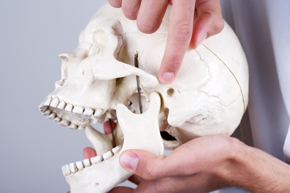 [pointing out the symptoms of tmj on a model skull]